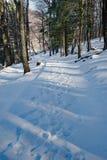 Schnee-bedeckte und Baum gezeichnete Handikap-zugängliche Spur an den Spitzen des Otters lizenzfreie stockfotos