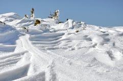 Schnee bedeckte Wacholderbüsche am Winter Stockfotos
