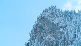 Schnee bedeckte Wald in den Alpenbergen stockbilder