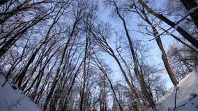 Schnee bedeckte Wald im Winter stock video footage