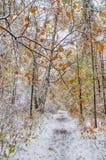 Schnee bedeckte Weg im Wald im frühen Winter Stockbild