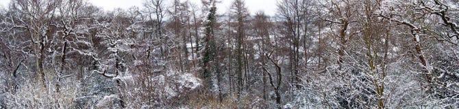 Schnee bedeckte Winterbäume - Panorama Stockbild