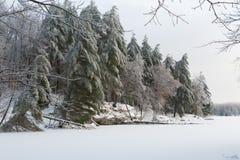 Schnee beladene Winterbäume stockbilder