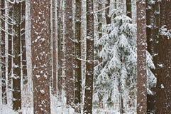 Schnee beladener Wald Stockfotos