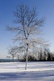 Schnee beladener Winterbaum Stockfoto