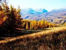 Schnee Berge und vegetaton im Herbst Stockfoto