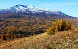 Schnee Berge und vegetaton im Herbst Lizenzfreies Stockfoto