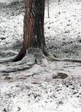 Schnee an bezahlt von einem enormen tree×¥ Lappland, Finnland lizenzfreie stockfotografie