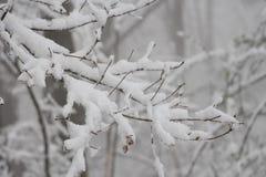 Schnee bezieht sich auf Formen von Eiskristallen, die von der Atmosphäre herbeiführen (normalerweise von den Wolken) Stockfotografie