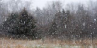Schnee blättert ab, fallend in das Grasland vor dem Wald Stockbild