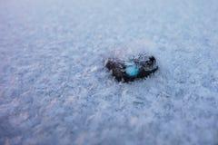 Schnee blättert auf Auto ab Lizenzfreies Stockbild