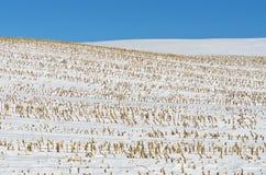 Schnee deckte Ackerland ab Stockfotografie