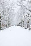 Schnee deckte Allee ab Stockfotografie