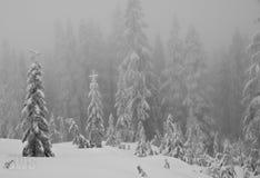 Schnee deckte alpine Bäume ab. Lizenzfreie Stockfotografie