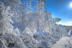 Schnee deckte Bäume ab Stockfotos