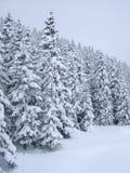 Schnee deckte Bäume ab Lizenzfreie Stockfotos