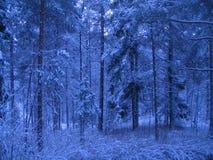 Schnee deckte Bäume ab Lizenzfreies Stockbild