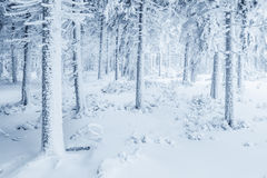 Schnee deckte Bäume ab Lizenzfreie Stockbilder