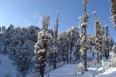 Schnee deckte Bäume ab Stockfoto