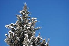 Schnee deckte Bäume an einem sonnigen Wintertag ab Stockfoto