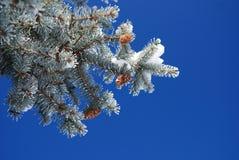 Schnee deckte Bäume an einem sonnigen Wintertag ab Stockfotografie