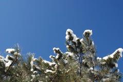 Schnee deckte Bäume an einem sonnigen Wintertag ab Lizenzfreies Stockfoto
