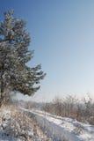 Schnee deckte Bäume an einem sonnigen Wintertag ab Stockbild