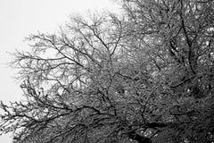Schnee deckte Bäume im Winter ab Stockfoto