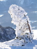 Schnee deckte Baum ab Lizenzfreie Stockfotografie
