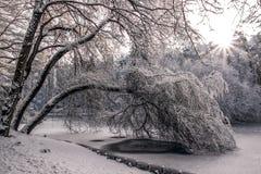 Schnee deckte Baum ab Lizenzfreie Stockfotos