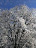 Schnee deckte Baum ab Stockfoto