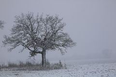 Schnee deckte Baum ab Stockbilder