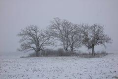 Schnee deckte Baum ab Stockfotos