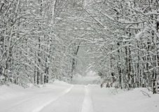 Schnee deckte Baum-Kabinendach ab lizenzfreie stockfotos