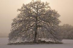 Schnee deckte Baum mit nebelhaftem Hintergrund ab Stockbild