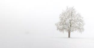 Schnee deckte Birnenbaum ab Lizenzfreie Stockfotografie