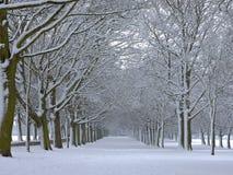 Schnee deckte Bäume ab Lizenzfreie Stockfotografie