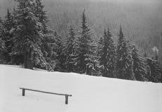 Schnee deckte Gebirgswald ab Stockfotografie