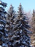 Schnee deckte gezierte Bäume ab Lizenzfreies Stockbild