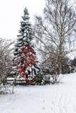 Schnee deckte Kiefer ab Lizenzfreie Stockfotografie