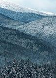 Schnee deckte moutainous Wald ab stockbild