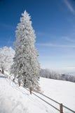 Schnee deckte Tanne ab Stockfoto