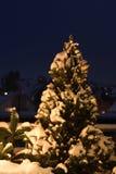 Schnee deckte Tannenbaum ab Stockbild
