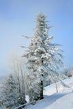 Schnee deckte Tannenbaum in den Bergen unter blauem Himmel ab Stockbild