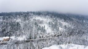 Schnee deckte Wald ab Lizenzfreie Stockfotos