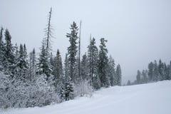 Schnee deckte Wald ab Stockbild