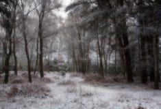 Schnee deckte Wald ab Stockbilder