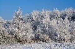 Schnee deckte Wald ab stockfoto