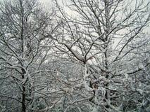 Schnee deckte Winterbaum ab Lizenzfreies Stockbild