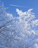 Schnee deckte Zweige und Flugzeug auf dem blauen Himmel ab Lizenzfreies Stockfoto